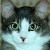 silverharloe userpic