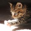 miikarin userpic