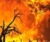 fire2009
