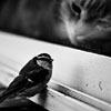 Kit: omgs it's a bird