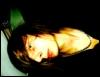 uncut_lawn88 userpic