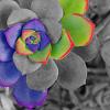 xenoverse userpic