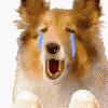Raethes: Wario dog - OMGSAD T_T