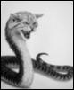 Пишет Alice Z.: Змеекошка