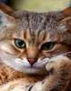 Сурьёзный кот