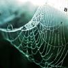 ranspiderweb