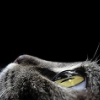 watchercat userpic
