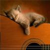 Cat_on_guitar