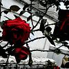 Patricia Suomi: roses