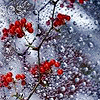 winterberries userpic