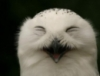 сова смеется