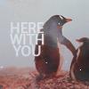elliotsmelliot: Animal Penguins