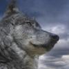 dancingwolf1288 userpic