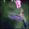 hummingbird89 userpic