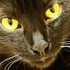 [Misc.]Black Cat