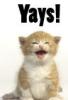 sarah: yays kitty