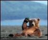 Jay Bohmer: Bear Dude