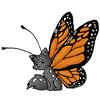 fox monarch butterfly