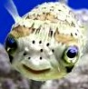sillyfish85 userpic