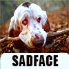 "Misc:  Bloodhound ""Sadface"""