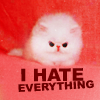 """Misc:  Puffy Kitten """"Hate Everything"""""""