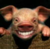 grinning pig