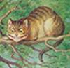 cat fiadhaich [userpic]