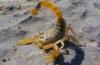 astra_scorpion userpic