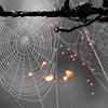 Lolita: spider web