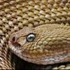 Змея-цветок