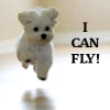 misc - flying puppy