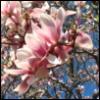 my_incandescent userpic