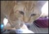 orangecat666 userpic