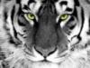 tigr_sp userpic