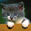 felaine: cat