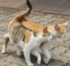 martovskie_koti userpic