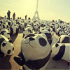 pandas in paris!