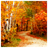 annElise: autumn -- road