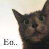 hungry cat, eo, heebum