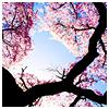 tree - pink