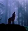 wolfa_moon userpic