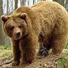 just bear