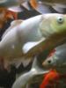 kalaaa