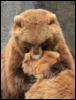 B.K. DeLong: bearhug