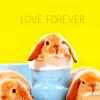 Bunny Love Forever