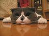 angellore78 userpic