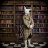 White Rabbit in Library