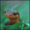 androgo_gecko userpic