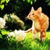 theprayercat userpic