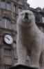 Медведь, белый, часовой